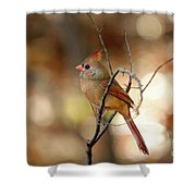 Beautiful Female Cardinal Shower Curtain
