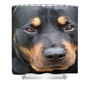 Beautiful Female Rottweiler Portrait Vector Shower Curtain