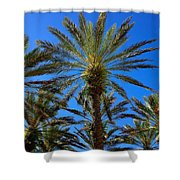 Beautiful Florida Palm Trees Shower Curtain