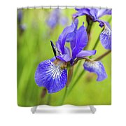 Beautiful Flower Iris Shower Curtain