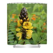 Beautiful Flower Shower Curtain