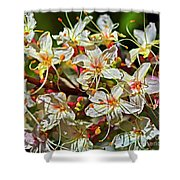 Beautiful Flowers Shower Curtain