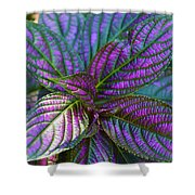 Beautiful Foliage  Shower Curtain
