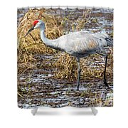 Beautiful Day For A Walk -sandhill Crane   Shower Curtain