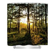Beautiful Forest At Sunrise Shower Curtain