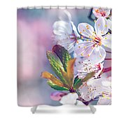 Beautiful Fruit Tree Blooming Shower Curtain