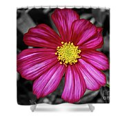 Beautiful Fuchsia Flower Shower Curtain