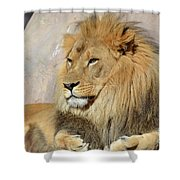 Beautiful Golden African Lion Relaxing In The Sunshine Shower Curtain