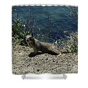 Beautiful Ground Squirrel Standing At The Edge Of The Coast Shower Curtain