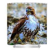 Beautiful Hawk Shower Curtain
