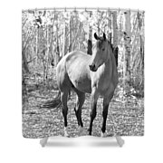 Beautiful Horse In Black And White Shower Curtain