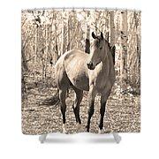 Beautiful Horse In Sepia Shower Curtain