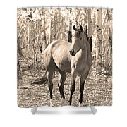 Beautiful Horse In Sepia Shower Curtain