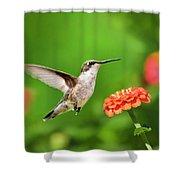 Beautiful Hummingbird Shower Curtain