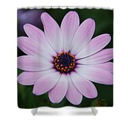 Beautiful In Pink Today Shower Curtain