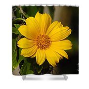 Beautiful In Yellow Shower Curtain