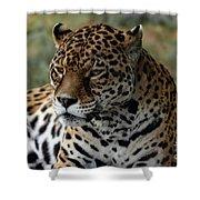 Beautiful Jaguar Portrait Shower Curtain