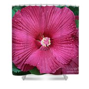 Beautiful Large Hibiscus Shower Curtain