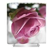 Beautiful Lavender Rose 2 Shower Curtain