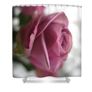 Beautiful Lavender Rose 3 Shower Curtain