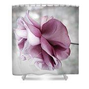 Beautiful Lavender Rose Shower Curtain