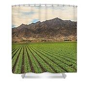 Beautiful Lettuce Field Shower Curtain