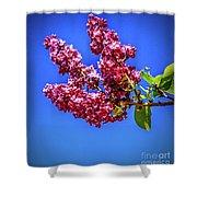 Beautiful Lilac Shower Curtain