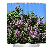 Beautiful Lilacs Day Shower Curtain