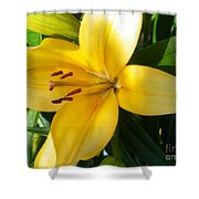 Beautiful Lily I Shower Curtain