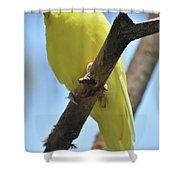 Beautiful Little Yellow Budgie Bird In Nature Shower Curtain