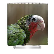 Beautiful Look At At The Profile Of A Conure Parrot Shower Curtain