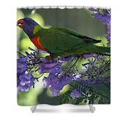 Beautiful Lorikeet Shower Curtain
