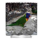 Beautiful Lorikeets Shower Curtain
