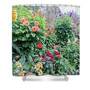 Beautiful Lot Of Dahlias,butchart Gardens,victoria,canada Shower Curtain