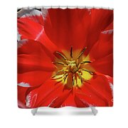 Beautiful Macro Of A Red Blooming Tulip Shower Curtain