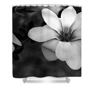 Beautiful Magnolia Shower Curtain