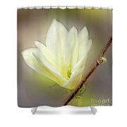 Beautiful Magnolia Original Painting 01 By H G Mielke Shower Curtain