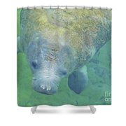 Beautiful Manatee Shower Curtain