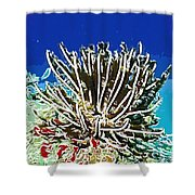 Beautiful Marine Plants 11 Shower Curtain by Lanjee Chee