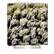 Beautiful Marine Plants 4 Shower Curtain by Lanjee Chee