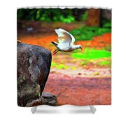 Beautiful Moment With A Bird Take Off , Wall Frame, Art Shower Curtain