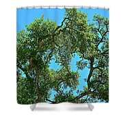 Beautiful Oak Shower Curtain