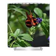 Beautiful Oak Tiger Butterfly On Purple Flowers Shower Curtain