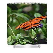 Beautiful Orange Oak Tiger Butterfly In Nature Shower Curtain