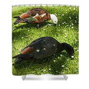 Beautiful Pair Shower Curtain