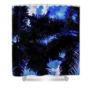 Beautiful Palm In Blue Sky Shower Curtain