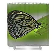 Beautiful Paper Kite Butterfly On A Green Leaf Shower Curtain