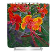 Beautiful Peacock Flower 5 Shower Curtain