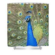 Beautiful Peacock Walking Around Shower Curtain