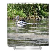 Beautiful Pelican Shower Curtain